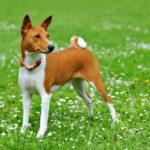 Собака ясновидящая — оказывается животные могут видеть намного больше!